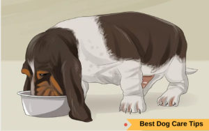 Best Dog Care Tips