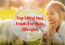Best Dog Foods For Skin Allergies