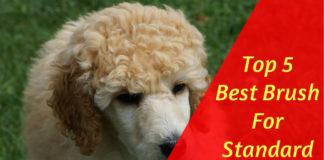 Brush For Standard Poodle