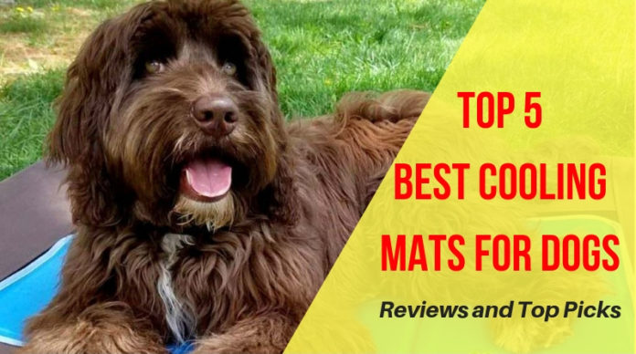 Best Cooling Mats for Dogs