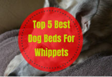 Best Dog Beds For Whippets