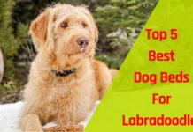 best dog beds for labradoodles