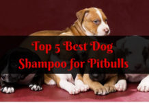 Best Dog Shampoo for Pitbulls