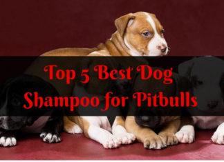 Best Dog Shampoo for Pitbulls