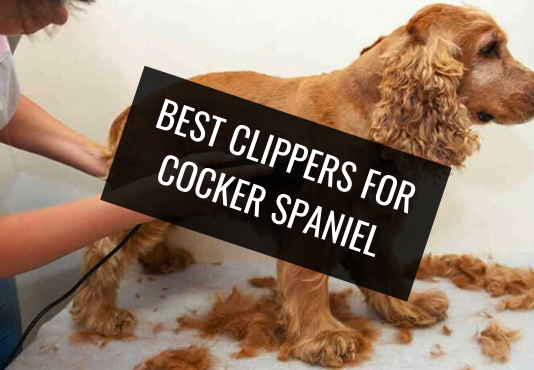 Best Clippers for Cocker Spaniel
